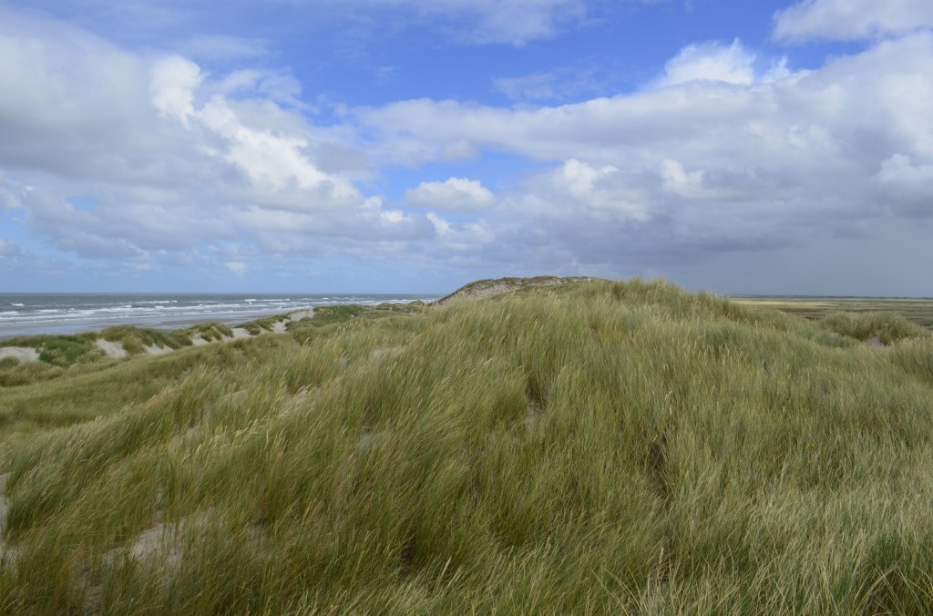 Dune Terschelling